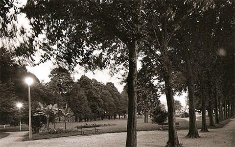 Sabato sera al parco